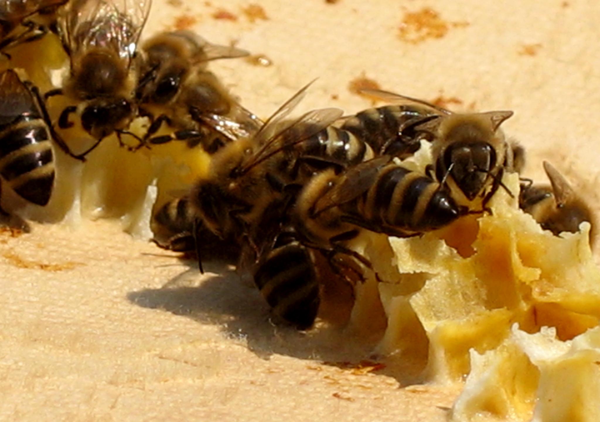 Albine la tara