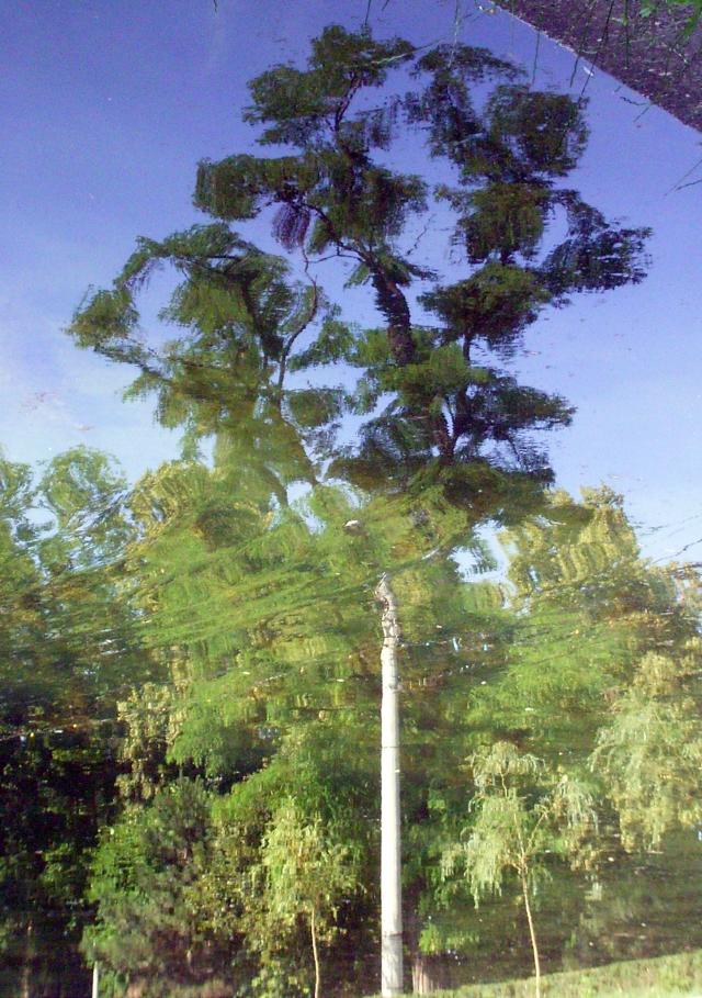 Copacul ce se oglindeste
