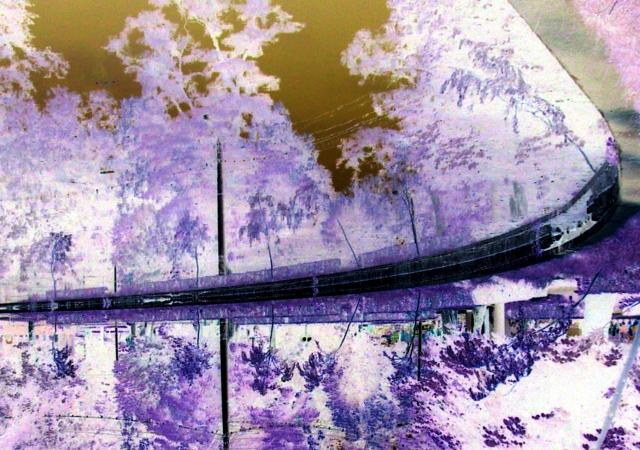Foto violeta