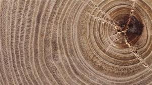 cercurile vietii copac